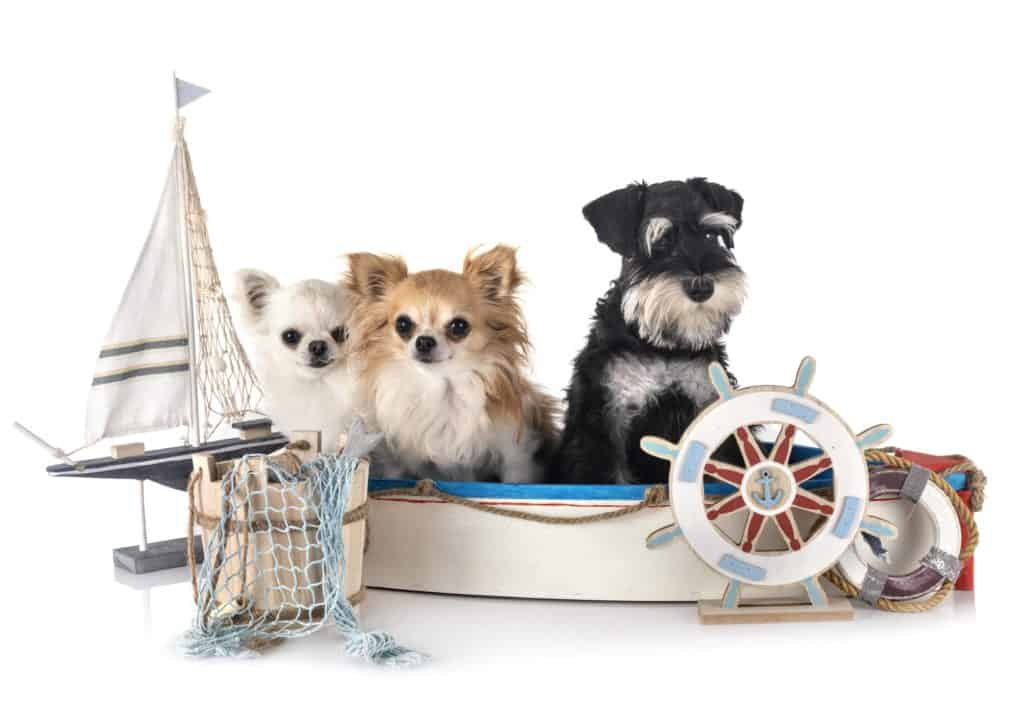 dogs on boats tips
