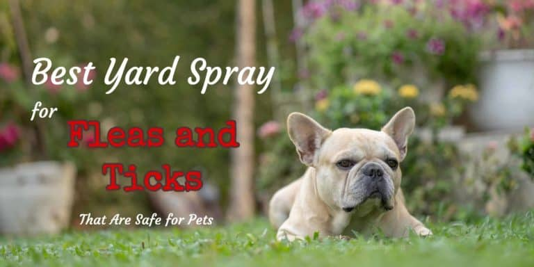 Best Yard Spray for Fleas and Ticks