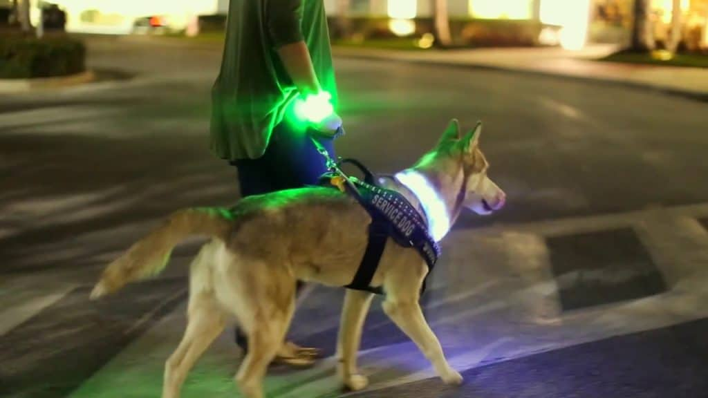 LED Dog Collar and leash