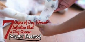 Dog Wound Infection