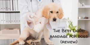 Liquid Bandage for Dogs