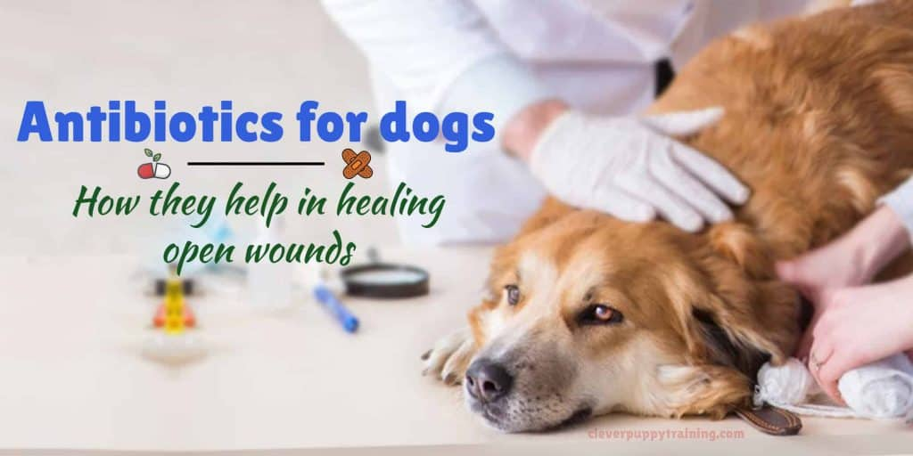 Open Wound Antibiotic for Dogs
