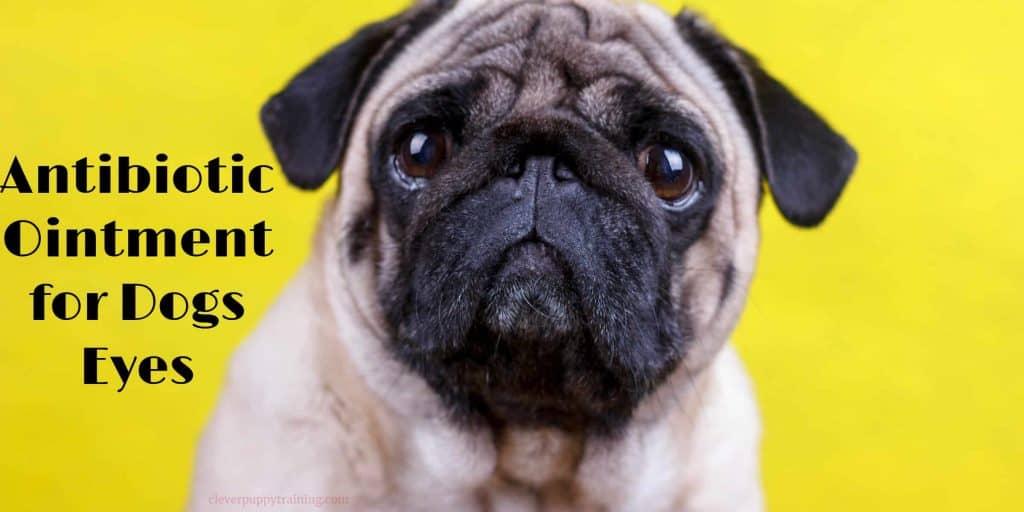 antibiotics ointment for dog eyes