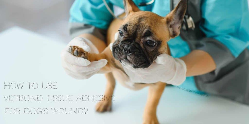 vetbond tissue adhesive for dog