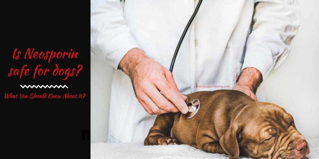 Is Neosporin safe for dogs