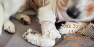 Can You Use Liquid Bandage On Dogs