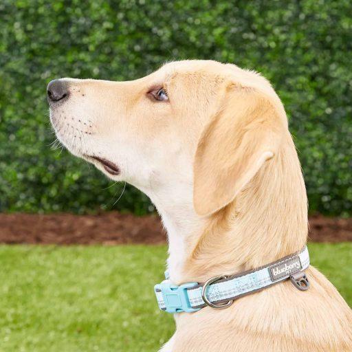 3M Reflective Pastel Color Neoprene Padded Dog Collars