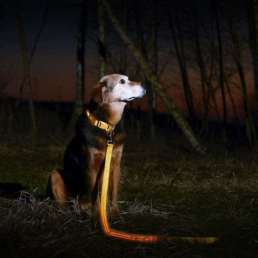 Illumiseen LED Dog Leash - USB Rechargeable