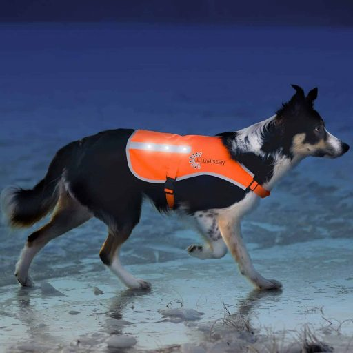 Illumiseen LED Dog Vest