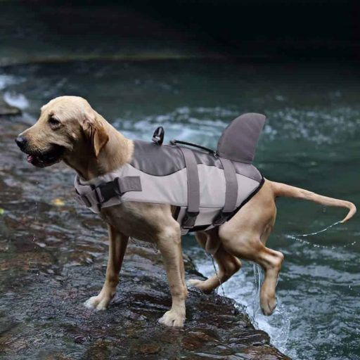 Life Vest for Small Dogs