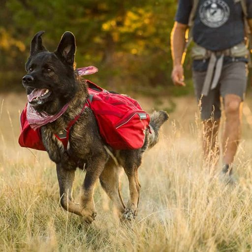 Multi-Day Backcountry Pack for Dogs